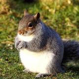 fatsquirrel